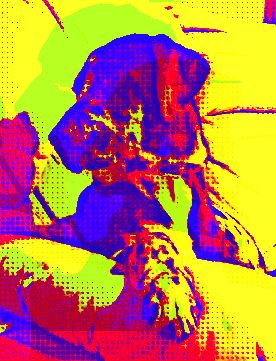 An image of a dog has an overlay of many bright colors while the dog is in a dark blue.